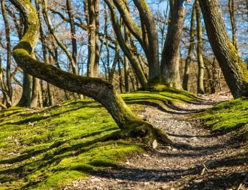 Fahrtziel Natur: Nationalpark Eifel